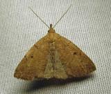 moth-23-07-2010-1004.jpg