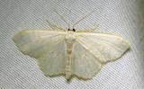 moth-23-07-2010-1005.jpg