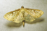moth-23-07-2010-1006.jpg