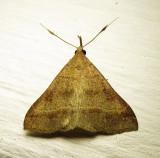 moth-27-07-2010-2.jpg