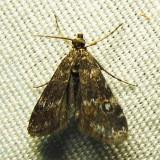 moth-24-07-1112.jpg