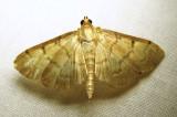 moth-23-07-2010-2111.jpg