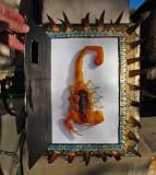 scorpion-framed-2.jpg