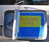 mystery-fish.jpg