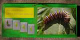 caterpillar-frame-1.jpg