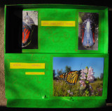caterpillar-frame-2.jpg