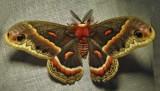 Moths of Round Hill, Nova Scotia