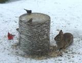 rabbit & friends
