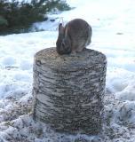 rabbit on bird feeder log