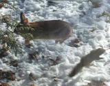 psycho-squirrel -2