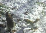 psycho-squirrel -5