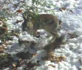psycho-squirrel -6