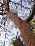 bark-chewing-1-large.jpg