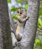 Chipmunk - view 2