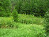 Spider Garden - Aug. 2, 2006