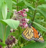 monarch-23-07-06-1-small.jpg