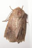 moth-23-05-08-2008.jpg
