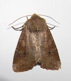 moth-23-05-08-2010.jpg