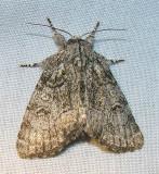 moth-29-05-2008-2.jpg