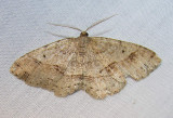 moth-29-05-2008-12.jpg