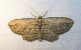 moth-04-06-2008-2.jpg