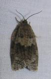 moth-04-06-2008-4.jpg
