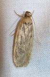moth-04-06-2008-5.jpg