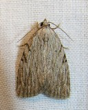 moth-04-06-2008-6.jpg