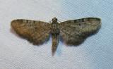moth-04-06-2008-7.jpg