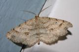 moth-04-06-2008-9.jpg