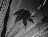 Palmetto-Sweetgum Leaf