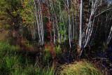 Autumn-in-the-Swamp-9