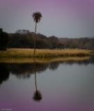 Ranthambore NP 2 of 1.jpg