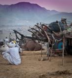 Camel Carts