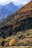 I colori dell'autunno nel PNALM , Fall colors in the Abruzzo National Park
