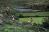 Lokaro fields