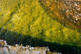 Black Sand Geyser Basin, abstract pattern