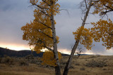 Roosevelt Country, Fall colours at Lamar Valley