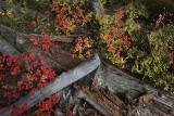 Autumn colours near Sting Lake