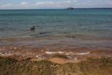 Punta blancas sharks, Bartolomé Island