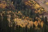 Rockchuck Peak forest