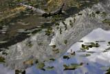 Reflection of Rockchuck Peak