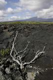 Lava field, Punte Espinosa, Fernandina Island