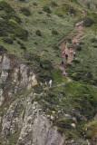 Ursa trail