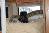 CHARLIE OUR LITTLE SCHNOODLE LOVED THE BED ALL FOR HIMSELF-NOTICE HE IS PAPER TRAINED..LOVES TO SIT ON THE PAPER TOO