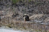 THEN WE SAW A PORCUPINE-DON GRABBED HIS TELEPHOTO LENS