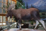 THE MOOSE INSIDE THE VISITOR'S CENTER WAS NOT REAL..