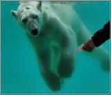 Zoo Amneville 2008