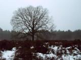 09_winterseriewaalwijk82.jpg