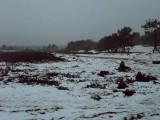 13_winterseriewaalwijk82.jpg